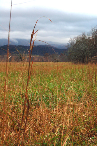 Cades Cove Meadow on Cloudy Day | by gawagley