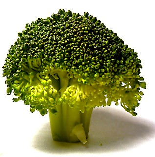 Broccolli doesn't grow on trees, you know | by Darwin Bell