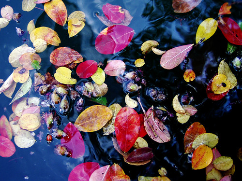 Autumn mosaic | by JenniferNelms