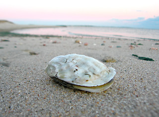 Oyster on Nantucket Sound 4:55pm | by Chris Seufert