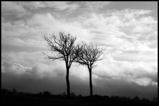 B&W trees | by andybvrs