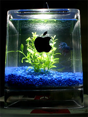 Mac g4 cube fish tank an apple g4 cube modded into an for Mac s fish and chips