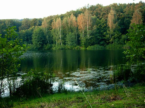 Forest lake in summer | by Axel-D