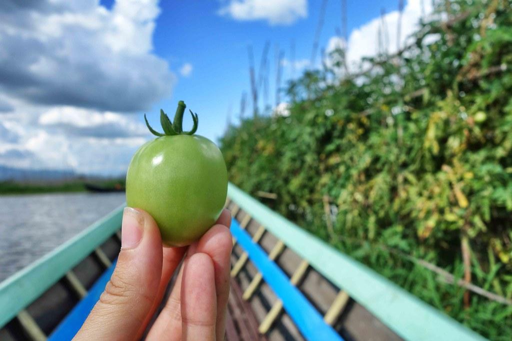 lac Inle jardin flottant tomate