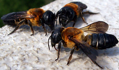 Giant Resin Bees at Wilder Tower | by Rachel Pennington