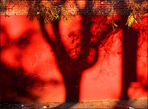 Red wall, autumn | by colorstalker