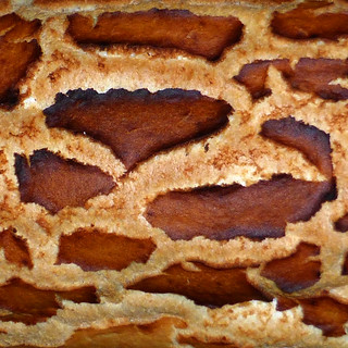 giraffe bread