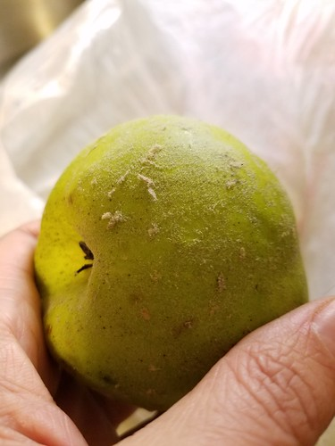 A Fuzzy Quince