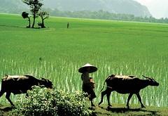 ruong_dong_vietnam