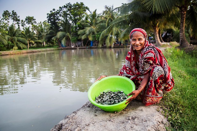 A woman prepares to stock genetically improved farmed tilapia fingerlings in her pond, Bagerhat Sador, Bangladesh. Photo by Md Masudur Rahaman.