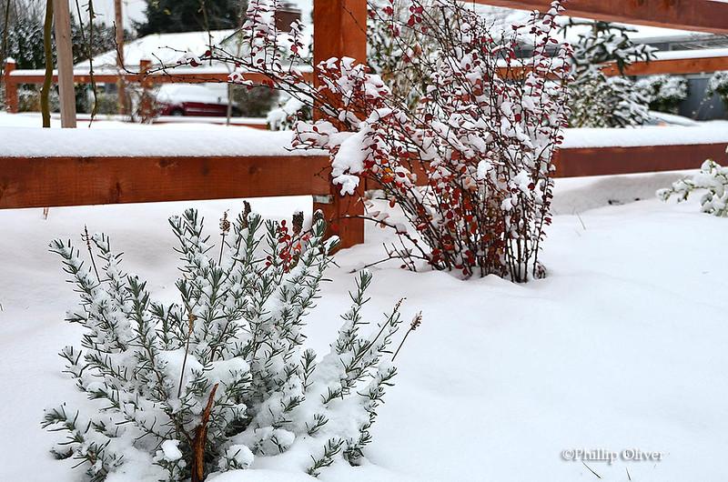 snow121516l