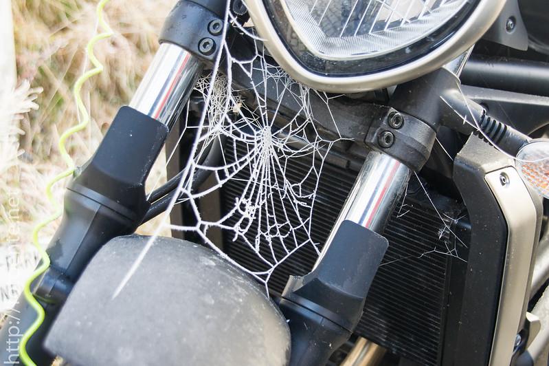 Spinnenreif
