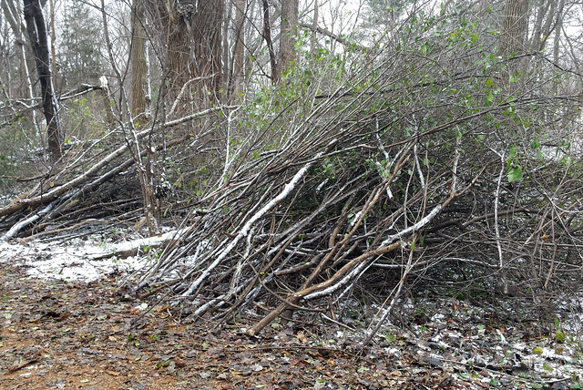 two buckthorn piles, lightly covered by snow