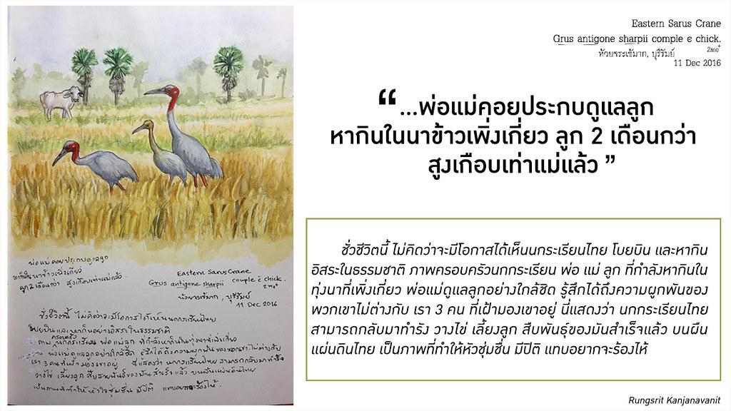 ภาพวาดนกกระเรียนไทย
