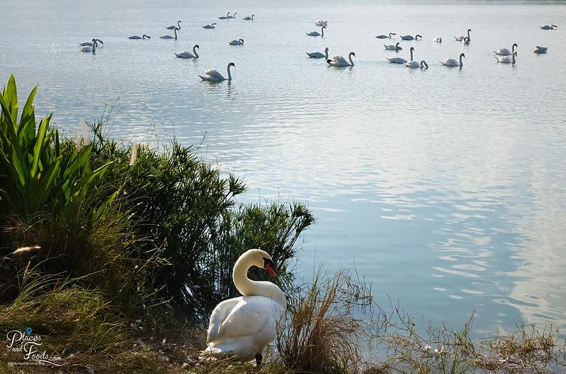 singha park goose