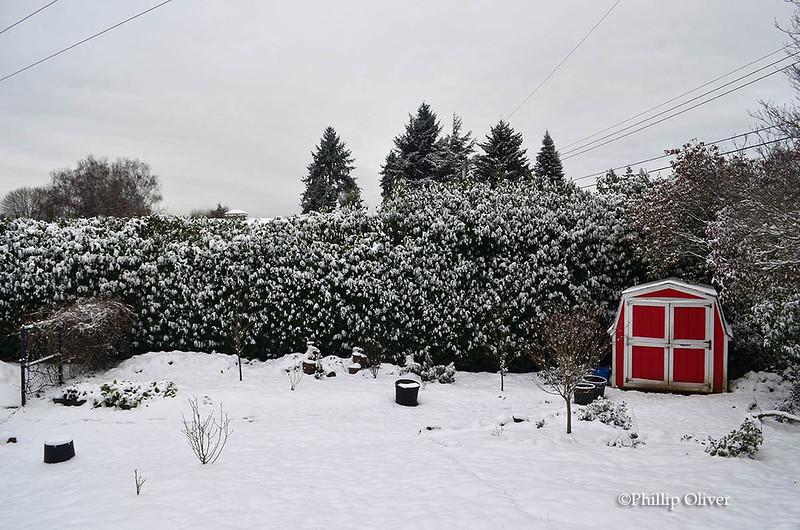 snow121516g