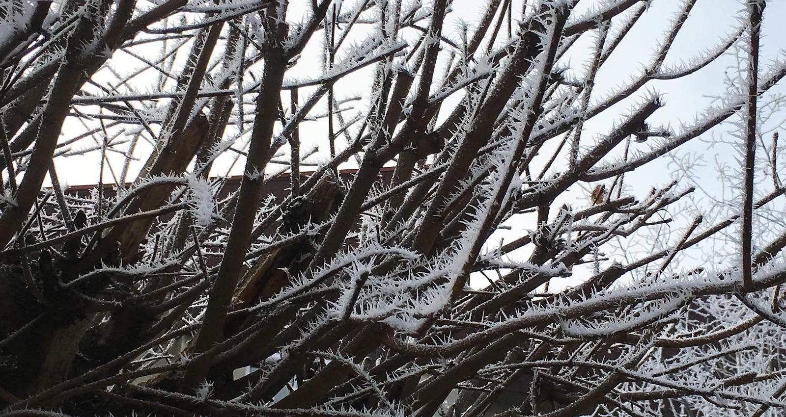 Eisbedeckte Bäume im Garten