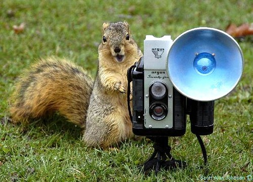 Buddy and his Argus 75 -------- | by SQUIRREL400 -   photographingsquirrels.com