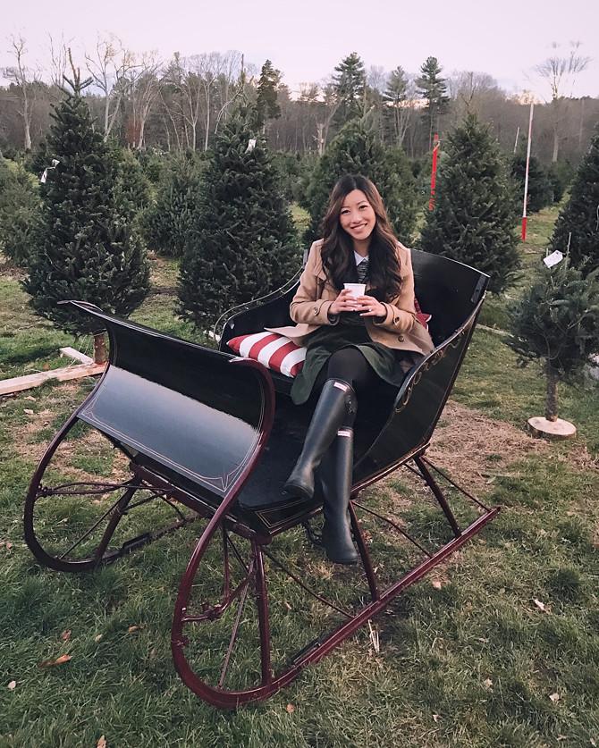 mistletree acres christmas tree farm new england santa sleigh