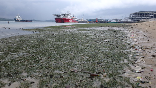 Seagrass meadows at Pasir Ris, Loyang after oil spill in Johor Strait, Jan 2017