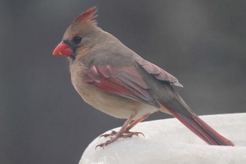 bird IMG_6373