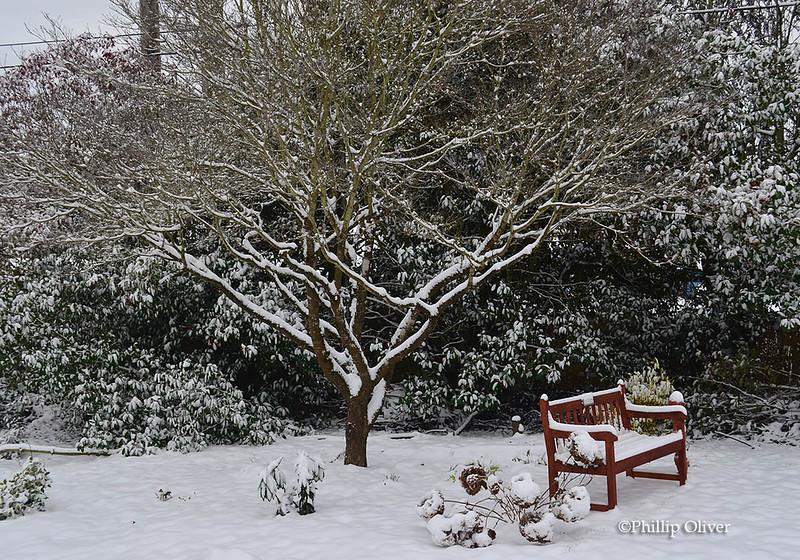 snow121516f