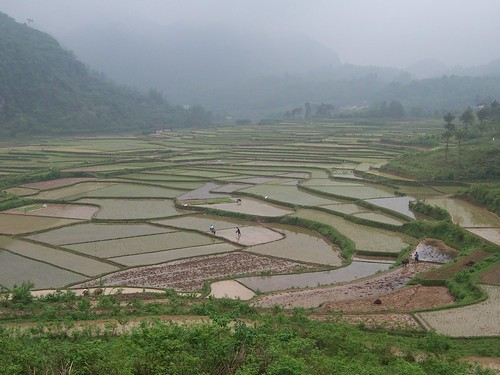 China - Yangshuo 29 - Rice Paddy Terraces | by mckaysavage