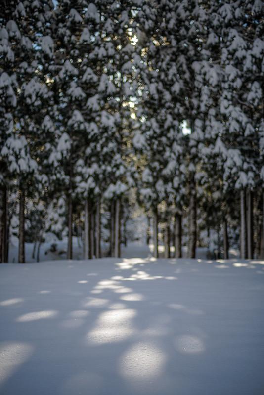 Sunlight through snow tree