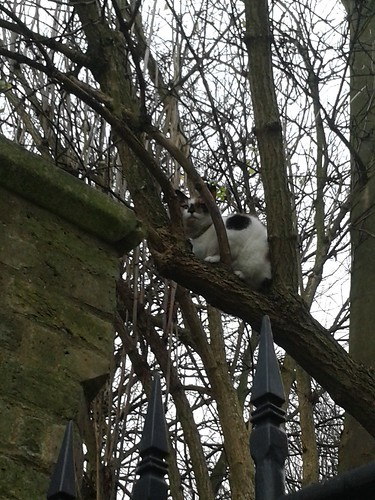 Cat in the Tree Near Highgate Cemetery