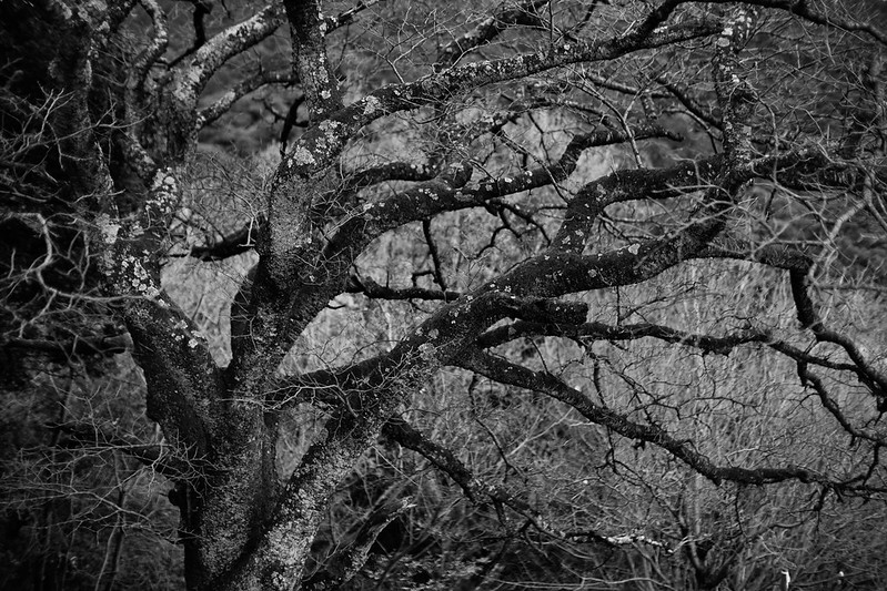 A tree monochrome