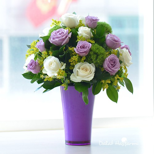 hoa hồng tím chúc mừng sinh nhật đẹp