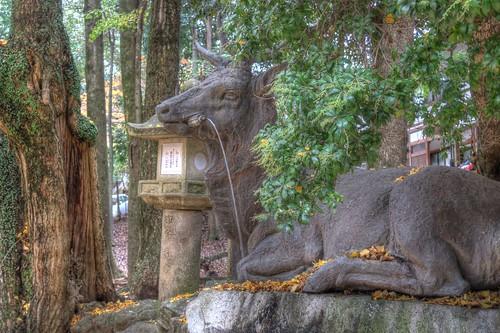 Kasuga Taisya Shrine on NOV 30, 2016 vol02 (11)