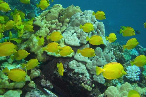 abundant yellow