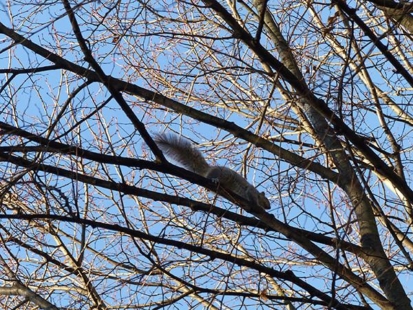 encore un écureuil