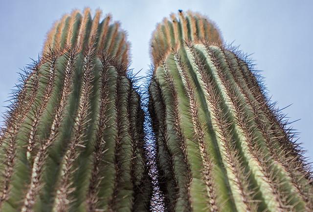 Cactus-20-7D1-010717