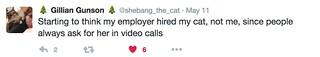 Cat video calls