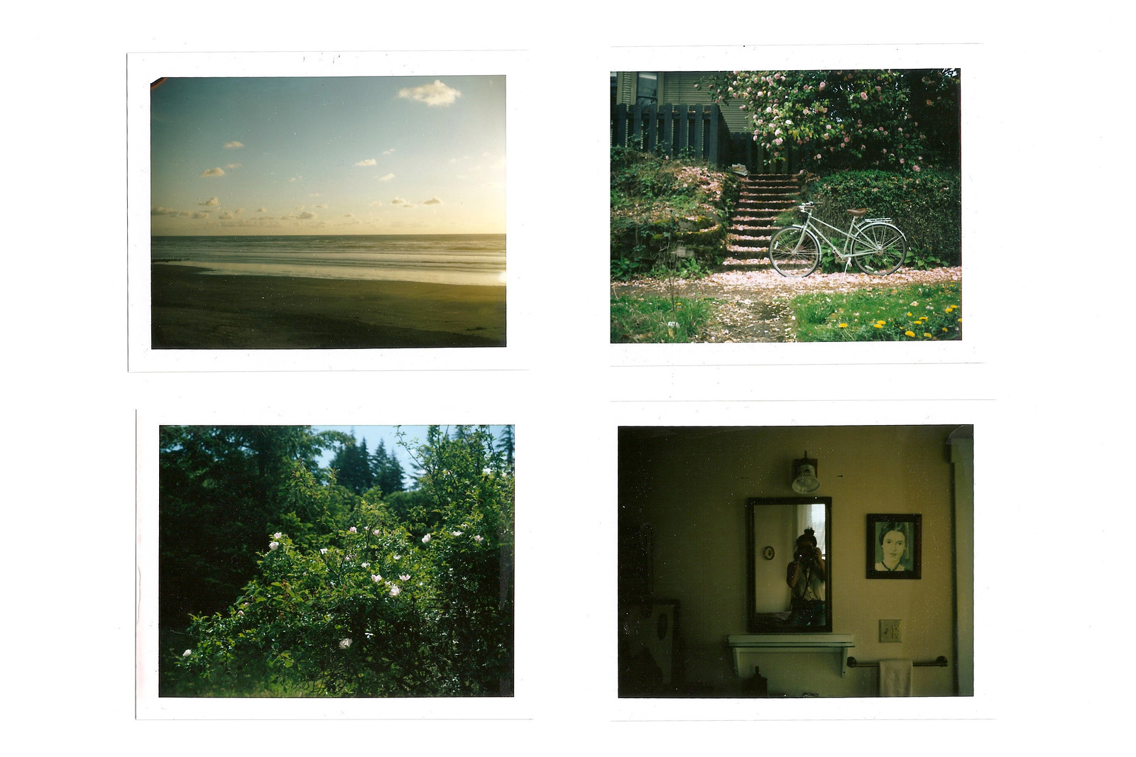 polaroid lands