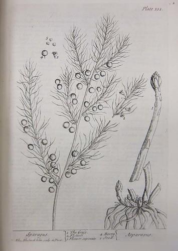 herbal14