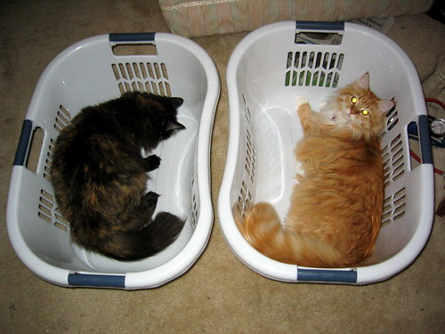 Two laundry baskets, two cats. | by oskay