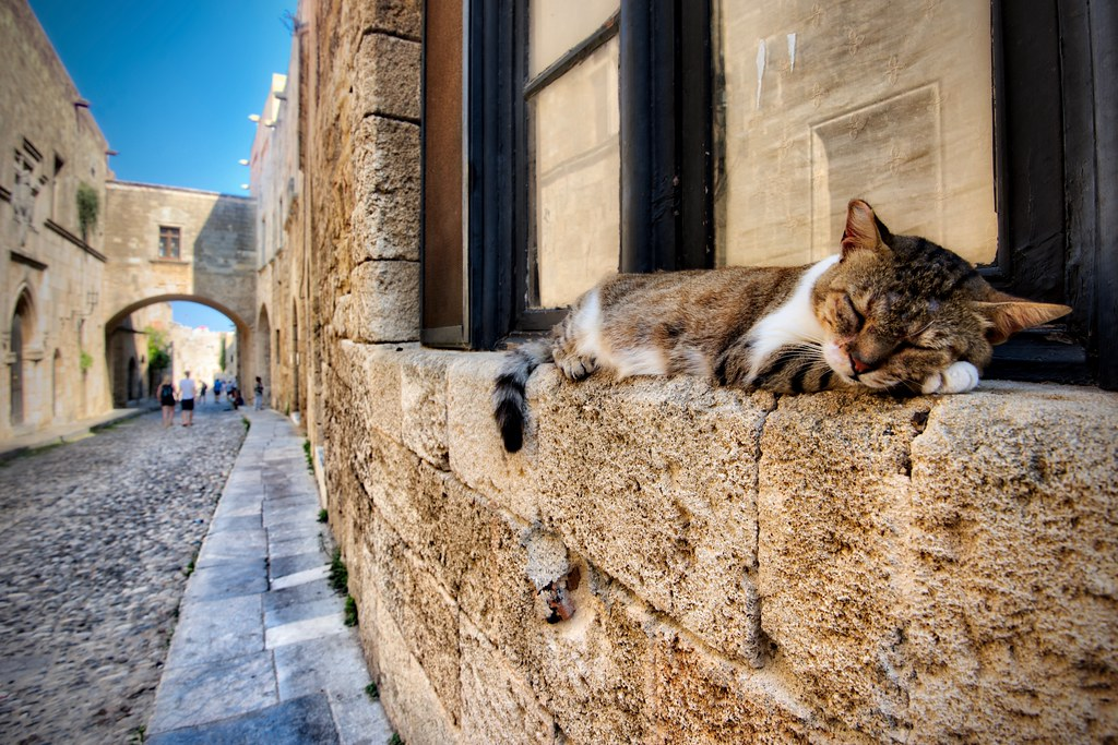 Tabby Cat on Avenue of the Knights