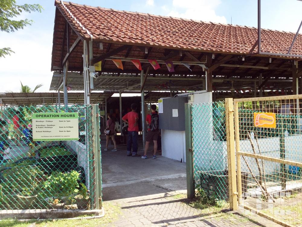 animal corner, farm, farm tour, farmart centre, singapore, where to go in singapore, 农市中心, 農市中心, review,farmart,goat