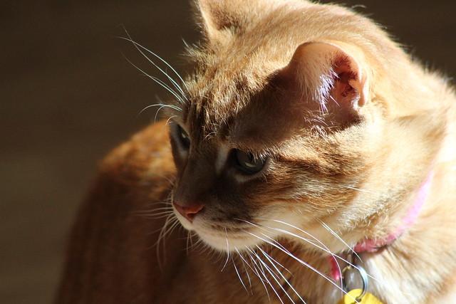 Handsome Buster