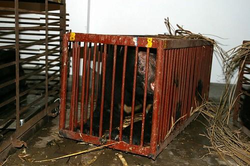 Quantock NOSE bear cage