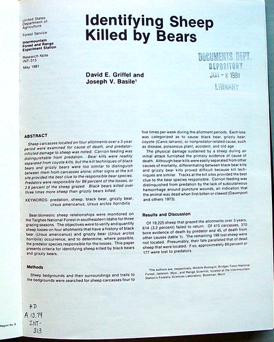Identifying Sheep Killed by Bears | by graylady