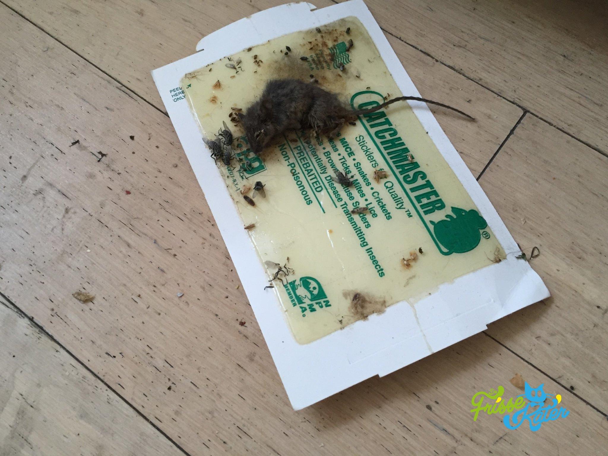 Muizen en ratten bestrijden in huis hoe los je het probleem op - Hoe je je huis regelt ...