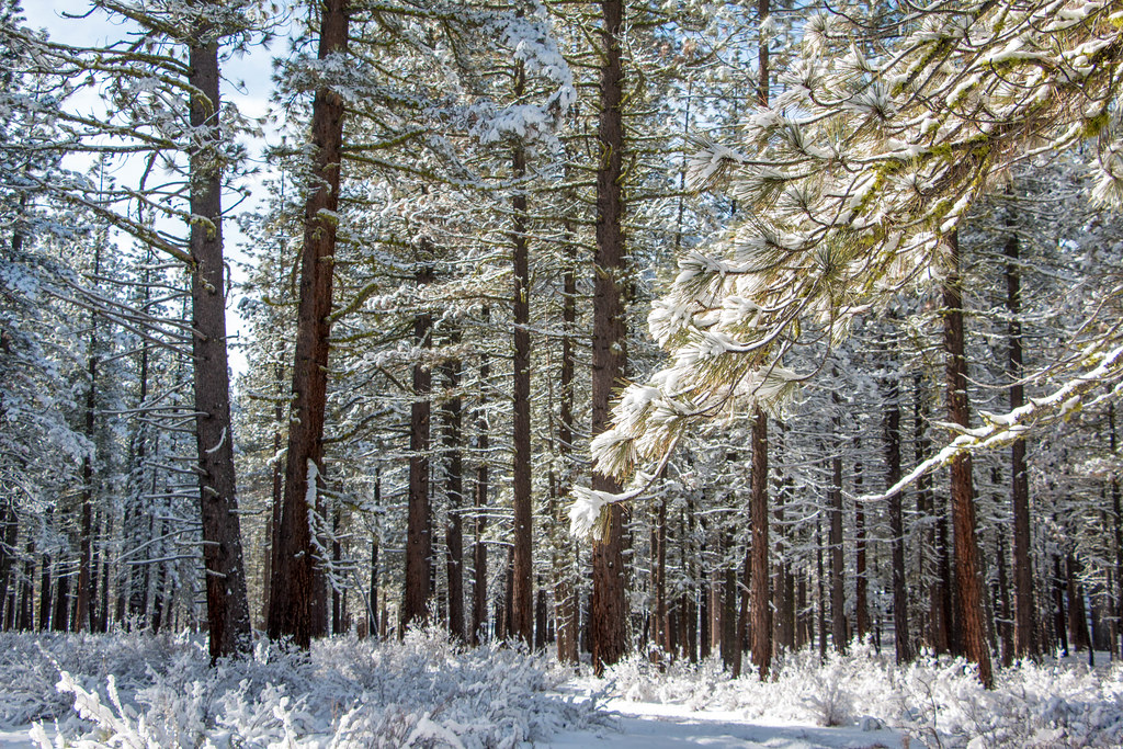 12.25. Plumas National Forest: Feather River