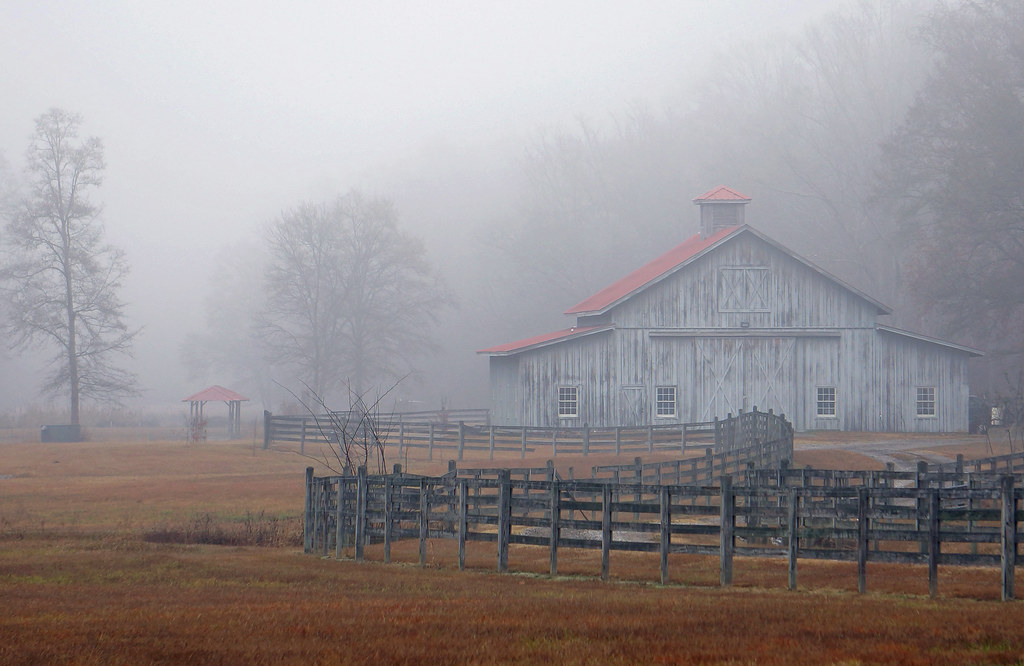 Foggy Morning in Alabama