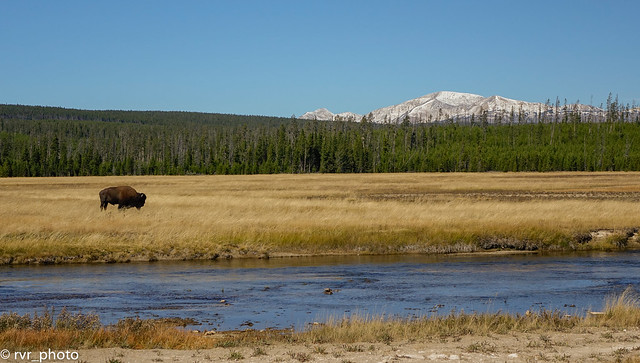 NP Yellowstone - Wyoming