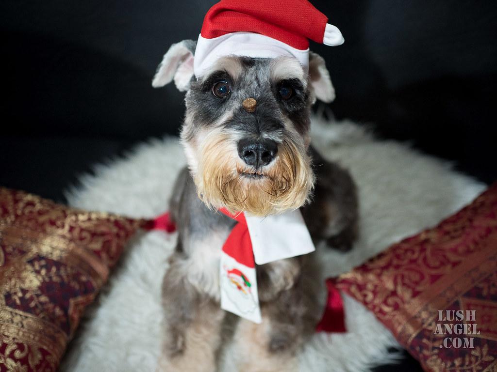 dog-grooming-manila