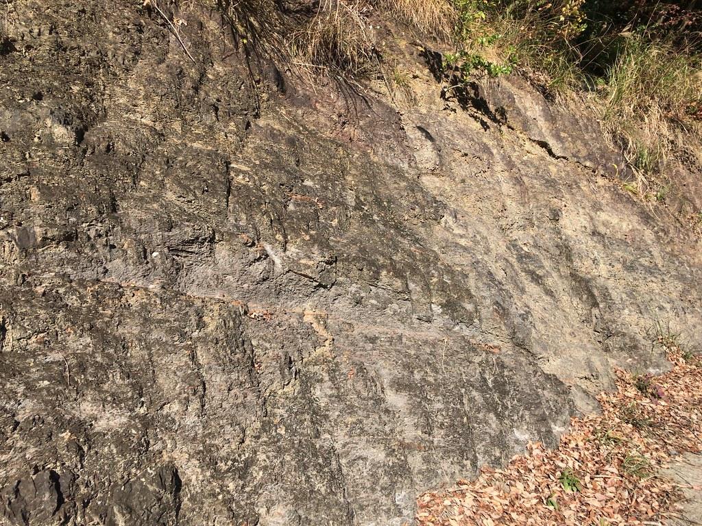 岡川近くの地層
